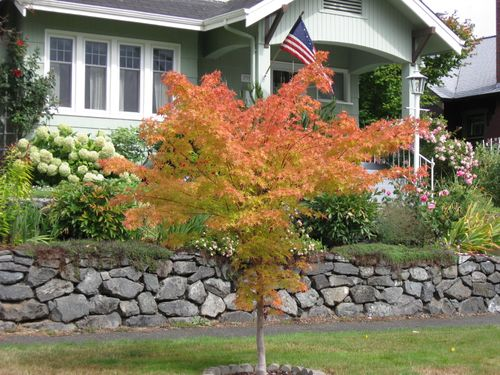 2009 Fall colors in Sept