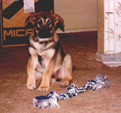 Grendel as a puppy