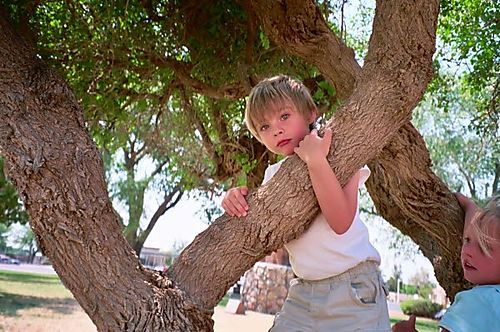 Raine in the tree
