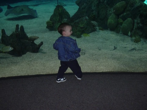 Rees at the aquarium